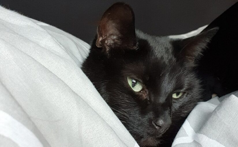Wist-je-datje: In Engeland brengt een zwarte kat geluk!